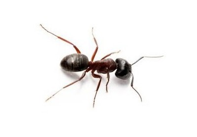 Ants & how to get rid of them