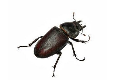 Beetles & how to get rid of them