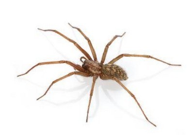 Spiders & how to get rid of them